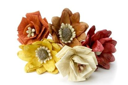 Picture of Indonesia decorative flowers